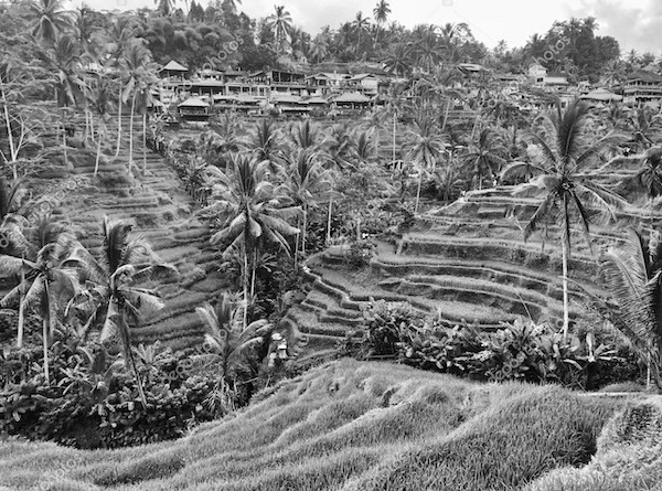 Rice Terrace - Kaamala Resort Ubud
